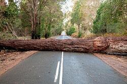 Fallen-Tree-Roadblock-300x198